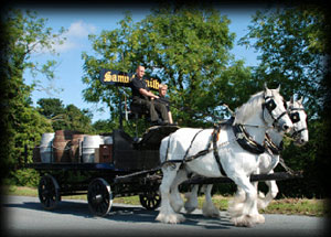 The Shire Horses making a beer delivery